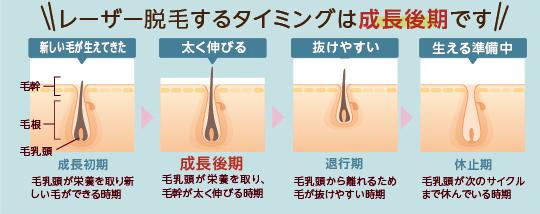 レーザー脱毛するタイミングは成長後期です